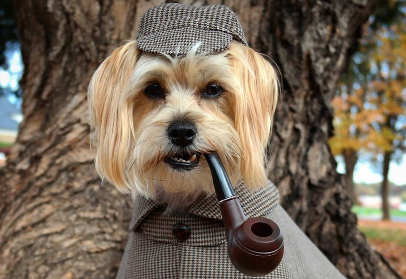 sherlock-dog-for-sales-processes