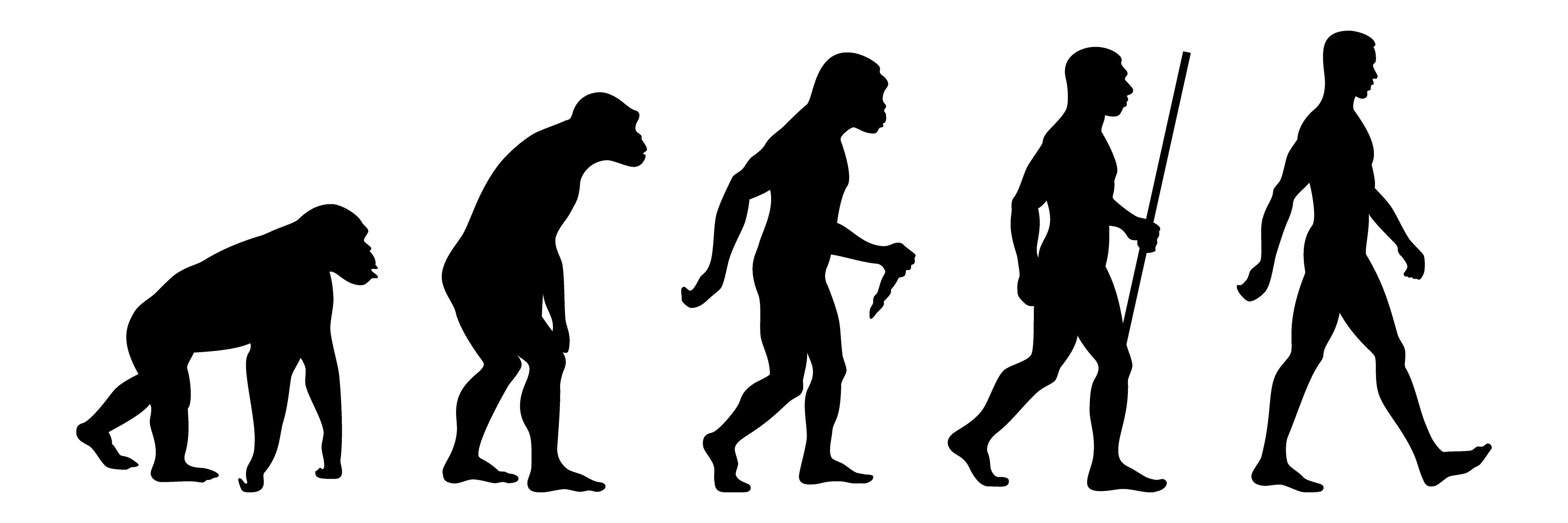 project vs process evolution