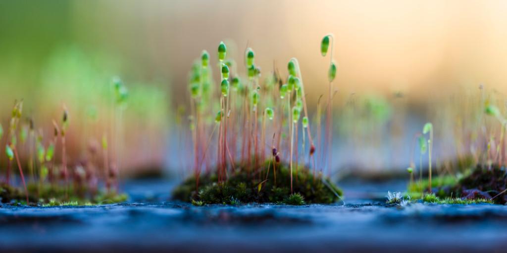 Entrepreneurial Spirit: Cultivate