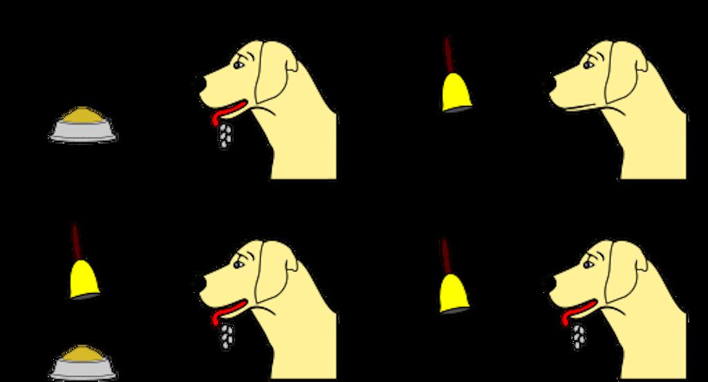 Pavlov's_dog_conditioning